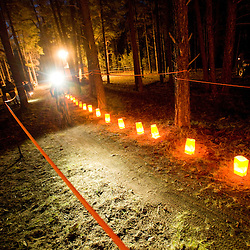 The enchanted forest comes alive as dark sets in on Saturday evening.