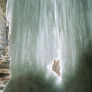 La Salle Canyon Falls in Winter - Frozen Waterfall at Starved Rock State Park in Illinois.  The cold Midwest winters freeze the waterfalls in the park creating a magnificent display of ice and icicles.  Water can be heard dripping through the ice. Starved Rock State Park is known for its multiple canyons and waterfalls which are unlike the flat midwest.  The canyons and waterfalls are all close to each other.  Being less that than two hours from Chicago, the park is popular place for hiking.