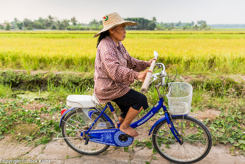 17 MARCH 2014 - LAM LUK KA, PATHUM THANI, THAILAND: A woman rides her bike to her rice field in Pathum Thani. She was going out to irrigate her fields. She said the drought in central Thailand would cut her rice crop and family income by at least one third. It hasn't rained in central Thailand in more than three months, impacting agriculture and domestic water use. Many farms are running short of irrigration water and salt water from the Gulf of Siam has come up the Chao Phraya River and infiltrated the water plants in Pathum Thani province that serve Bangkok. PHOTO BY JACK KURTZ