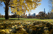 Fall in Central Park, Manhattan.