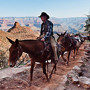 A rider leads a horse train up the Bright Angel Trail. Exceptional landscape vistas draw millions of worldwide visitors to the South Rim of Grand Canyon National Park, Arizona, USA. Grand Canyon began forming at least 5 to 17 million years ago and now exposes a geologic wonder, a column of well-defined rock layers dating back nearly two billion years at the base. While the Colorado Plateau was uplifted by tectonic forces, the Colorado River and tributaries carved Grand Canyon over a mile deep (6000 feet / 1800 meters), 277 miles (446 km) long and up to 18 miles (29 km) wide.