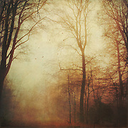 Forest in autumn colours &amp; mist<br /> <br /> Prints &amp; more: http://society6.com/product/Fall-Tales_Print<br /> <br /> Redbubble Prints: http://www.redbubble.com/people/dyrkwyst/works/23835838-fall-tales?asc=u&amp;ref=recent-owner