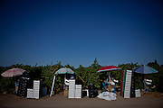 Table grapes are packaged in the field in Fresno, Calif., September 24, 2012.