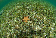 San Blas Underwater