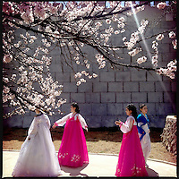 Women in traditional dress beneath cherry blossoms in Pyongyang, North Korea.