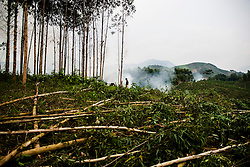 Lone silhouette stands in a deforested area, Yen Bai Province, Vietnam, Southeast Asia