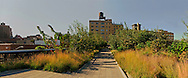 """Highline, New York City, New York, designed by landscape architects James Corner Field Operations, with architects Diller Scofidio + Renfro"""""""