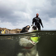 Split underwater shot with Tam the collie holding a ball in his mouth with his owner in the background on shore.