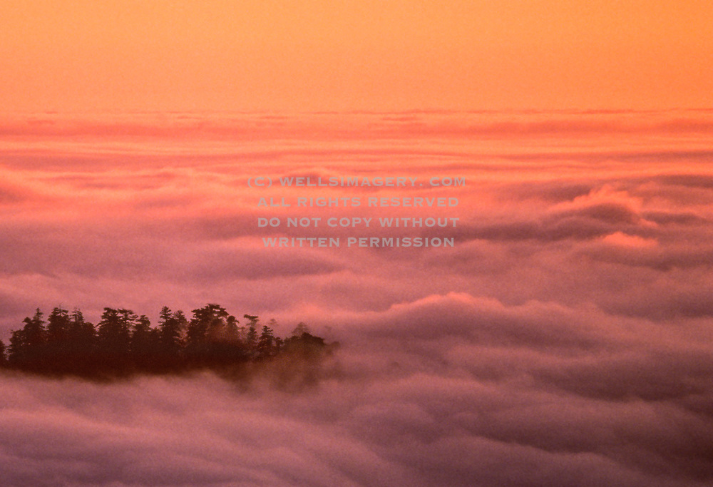 Image of redwood trees in fog at Redwood National Park, California, America west coast