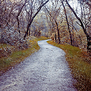 Hiking Trail Between Beals Point and Granite Bay Folsom Lake Rec Area. This image was taken immediately after a major rain cell passed over saturating every last once of land. March 2011.