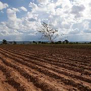 FAO - ZAMBIA Dec 2010