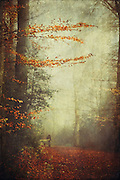 walking the dog on a foggy morning in fall - texturized photograph