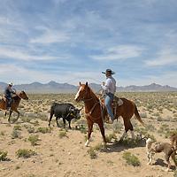 Cowboys near Warm Springs,Nevada,USA<br /> Model released 0427, o428
