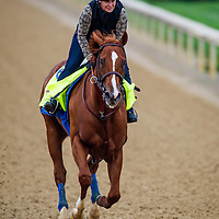 April 30, 2014: Chitu gallops in preparation for the Kentucky Derby at Churchill Downs in Louisville Ky. Alex Evers/ESW/CSM