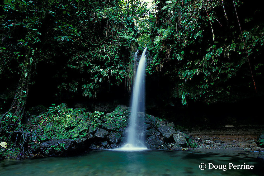 The Emerald Pool, Commonwealth of Dominica ( Eastern Caribbean )