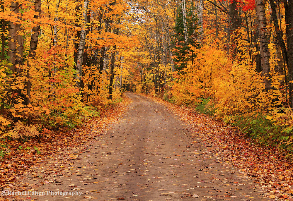 &quot;Magical Autumn Mystery&quot; 2<br /> <br /> A magical winding back country road in autumn! Fall foliage at it's peak! Pure magic!!<br /> <br /> Autumn Landscapes by Rachel Cohen