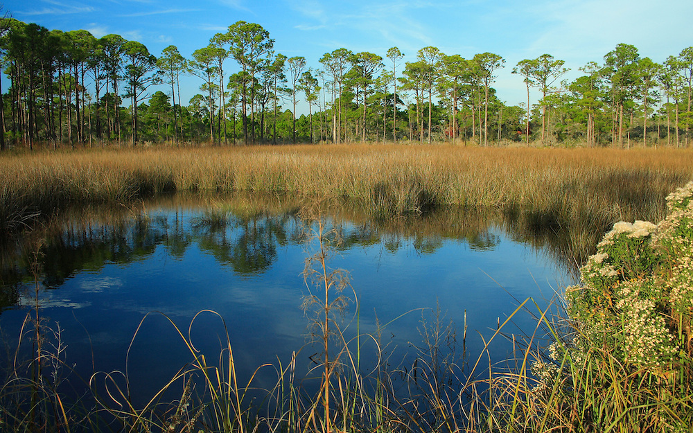 Sand Pines and Pond
