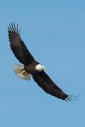 Bald Eagles of Onondaga Lake 2/16/2013 Up Close