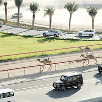 Dubai, United Arabs Emirates, 23 November 2008 <br /> Robot controlled camel race in Dubai.<br /> Photo: Ezequiel Scagnetti