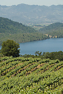 Chappellet vineyards on Pritchard Hill above Lake Hennessey, Napa, California