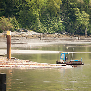 A one man tugboat, or boom boat, at work forming up bundled logs up logs into large log booms.  Along the Squamish waterfront.  Squamish BC, Canada