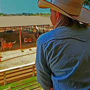Cowgirl watching her longhorns, Fort Worth Stock Yards, Fort Worth, Texas