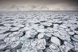 Panecake ice in Raudfjorden in March at the northern tip of Spitsbergen, Svalbard, Norway