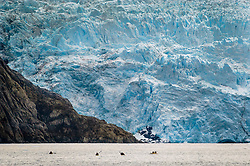 Kayakers are dwarfed by the massive Holgate Glacier at sunset on the Holgate Arm of Aialik Bay in Kenai Fjords National Park in Alaska. Photo was taken from the Holgate public use cabin. The park, located near Seward, Alaska, is known for its glaciers that flow out from the Harding Icefield, and the coastal fjords shaped by its receding glaciers. Approximately 51 percent of the park is covered by ice. The Harding Icefield, thousands of feet deep, is the largest icefield solely contained within the United States. Exit Glacier, is one of the most accessible glaciers in Alaska with easy walking trails leading up to the face of the glacier and more difficult trails leading up to the Harding Icefield which feeds Exit Glacier. Abundant land and sea life can be found within the parks boundaries including black and grizzly bears, Steller sea lions, puffins, humpback and orca whales. The park is a popular destination with sea kayakers who frequent Aialik Bay, Holgate Arm, Pederson Lagoon and Northwestern Fjord for magnificent views of the Aialik, Holgate, and Pederson glaciers. Tour companies offer boat tours out of Seward.