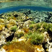 Algae and corals, Coral reef at the Polisini Greek Wreck  (Kinsei Maru), Silver Banks Marine Sanctuary, Dominican Republic, Caribbean Sea