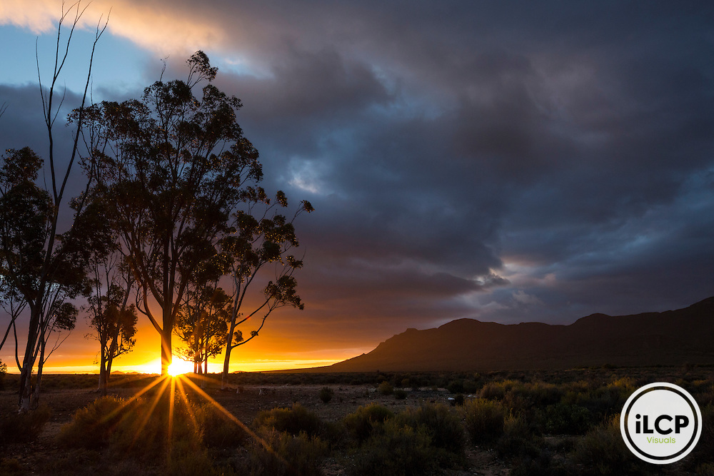 Sunrise on the central camp in the heart of the Reserve Anysberg in the Klein Karoo.<br /> Western Cape, semi-arid Klein Karoo, South Africa / Lever de soleil sur le camp centrale au c&oelig;ur de la R&eacute;serve d&rsquo;Anysberg dans le Klein Karoo.<br /> Western Cape, semi-arid Klein Karoo, South Africa