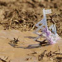 A princess tiara was left behind in the mud at an obstacle during the Bluegrass Mud Run, a 5K military-style obstacle course race sponsored by WUKY and the University of Kentucky ROTC in Lexington, Ky., on Saturday, September 22, 2012. Photo by David Stephenson