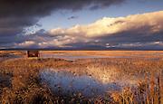 Lower Klamath National Wildlife Refuge, White Lake area along Hwy 161 on the California-Oregon border.