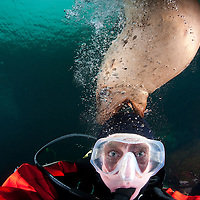 Canada, British Columbia, Hornby Island, Self-portrait of photographer Paul Souders scuba diving with Stellers Sea Lion