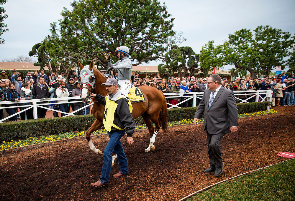 January 09, 2016: California Chrome and Victor Espinoza walk in the paddock with Alan Sherman before the San Pasqual Stakes at Santa Anita Park, Arcadia CA. Evers/ESW/CSM