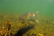 Musky<br />