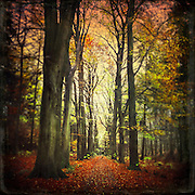 Beech tree alley on a rainy November day- texturized photograph<br /> <br /> Prints: https://crated.com/art/133965/fall-alley-by-dirkwustenhagen