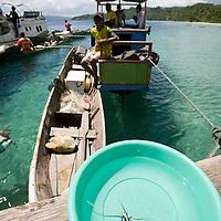 Jeune langouste venant d'&ecirc;tre p&ecirc;ch&eacute;e<br /> <br /> village de Bonebaru sur l'ile Banggai dans les Sulawesis en Indon&eacute;sie - Mission Banggai Cardinal Fish, Mai 2008, Act for Nature - Musee oceanographique de Monaco