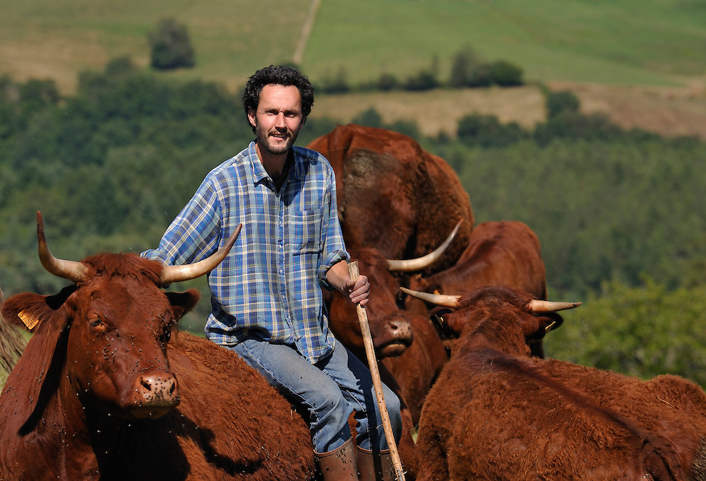 23/07/08 - MAURS - CANTAL - FRANCE - Pierre COUDERT, eleveur bio de vaches allaitantes Salers - Photo Jerome CHABANNE
