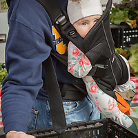 Eight month old Rose watches on as her father, Doug Allan, selects peppers at the Saturday Market in Calistoga, CA  dca2203@hotmail.com