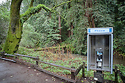 Pay phone and Moss covered trees in Muir Woods National Park, California U.S.A.<br />