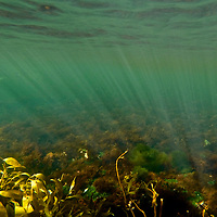 Giant Kelp Forest ( Macrocystis pyrifera). Isla de Los Estados (Staten Island), an Ecological and Historical Reserve  has been off limits to tourism since 1923.