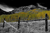 Fall Aspens near Ashcroft a Ghost Town in Colorado. Gone to See America 2013. Image taken with a Leica X2 camera (ISO 100, 24 mm, f/16, 1/125 sec). B&W + one color, processed in Capture One Pro 7 and Photoshop CS 6. Day 3 on a Colorado Rockies Photo Safari with Jason Odell.