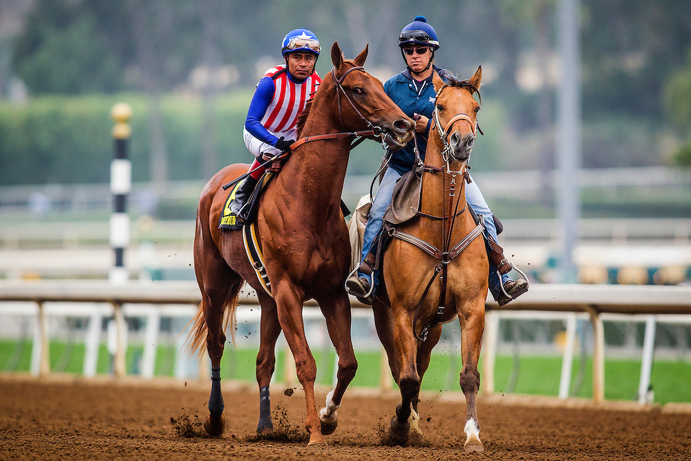 February 07 2015: Dortmund with jockey Martin Garcia up wins The GII Robert Lewis Stakes at Santa Anita Park in Arcadia CA. Alex Evers/ESW/CSM`