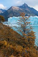 South America, Patagonia, Argentina, Santa Cruz, El Calafate, Los Glaciares, National Park; UNESCO; World Heritage, Perito Moreno glacier