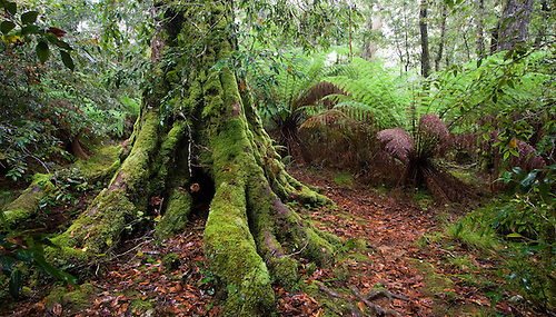 moss-covered forest by Mark-Heather on DeviantArt