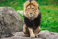 Travel photography on a cloudy spring day at the Calgary Zoo<br /> <br /> &copy;2016, Sean Phillips<br /> http://www.RiverwoodPhotography.com