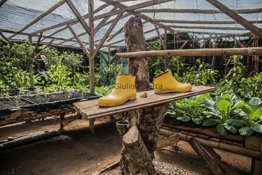 The organic greenhouse of Finca Bellavista
