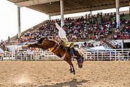Saddle Bronc Riding, Crow Fair Rodeo, Crow Indian Reservation, Montana, Marty Young Bear