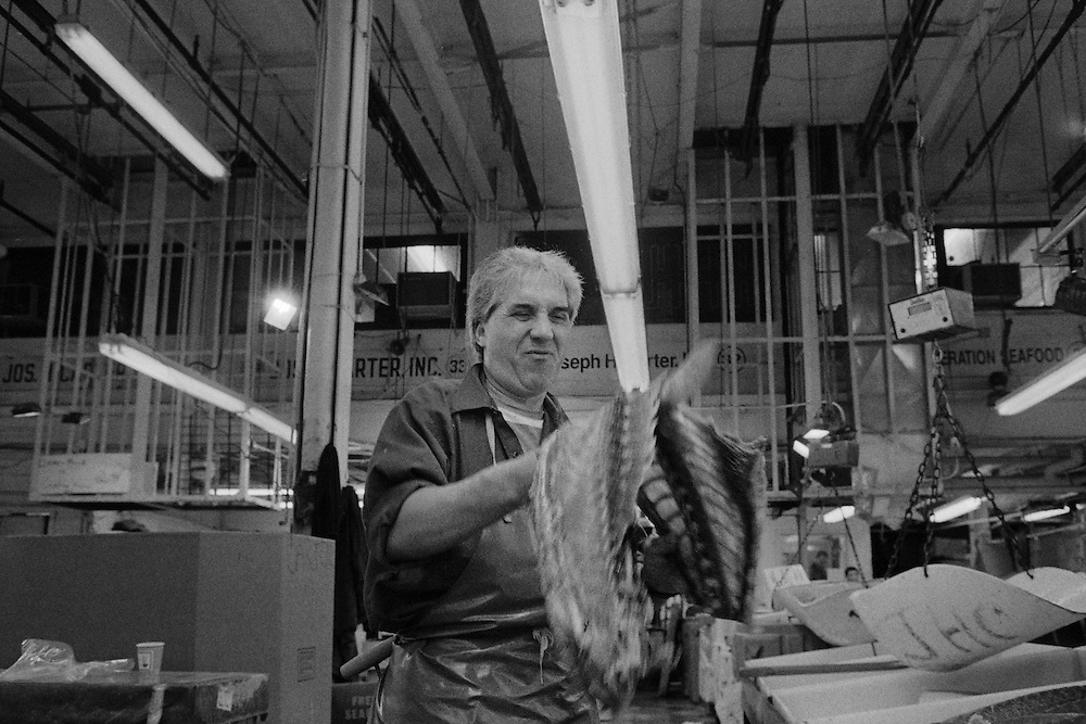 After fileting the spine of this fish was broken so the remains could be folded in half to better fit into the trash bin. The Fulton Street Fish Market operated in this location near the Brooklyn Bridge for 183 years until it was relocated to the Bronx in 2005.