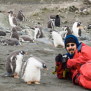 """A man in red clothing photographs Gentoo Penguins (Pygoscelis papua) on Aicho Island, Antarctica. """"Don't approach penguins closer than 15 feet,"""" says an Antarctic tourism rule in 2005. But if you lie down on the ground more than 15 feet away, a curious Gentoo Penguin chick may approach you. An adult Gentoo Penguin has a bright orange-red bill and a wide white stripe extending across the top of its head. Chicks have grey backs with white fronts. Of all penguins, Gentoos have the most prominent tail, which sweeps from side to side as they waddle on land, hence the scientific name Pygoscelis, """"rump-tailed."""" As the the third largest species of penguin, adult Gentoos reach 51 to 90 cm (20-36 in) high. They are the fastest underwater swimming penguin, reaching speeds of 36 km per hour. This photo was licensed to the Antarctic and Southern Ocean Coalition (ASOC) for publication in the scientific journal Antarctic Science and for use in a poster for the June 2011 Antarctic Treaty Consultative Meeting. For licensing options, please inquire."""